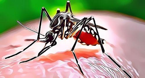 Testimoni Andrographis Centella Malaria